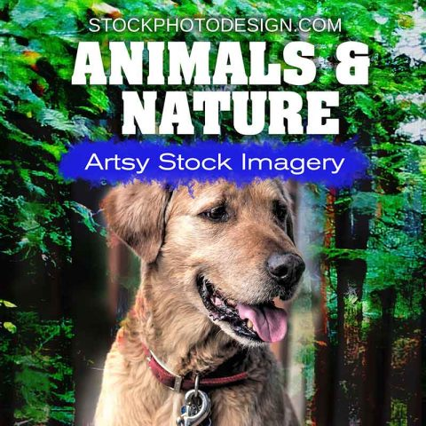 Animals and Nature Images