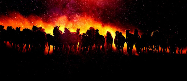 Blazing Group Of Horses Running - Royalty-Free Stock Imagery