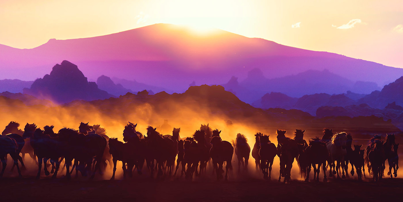 Group of Horses Running HD Photo Montage 03 - Royalty-Free Stock Imagery