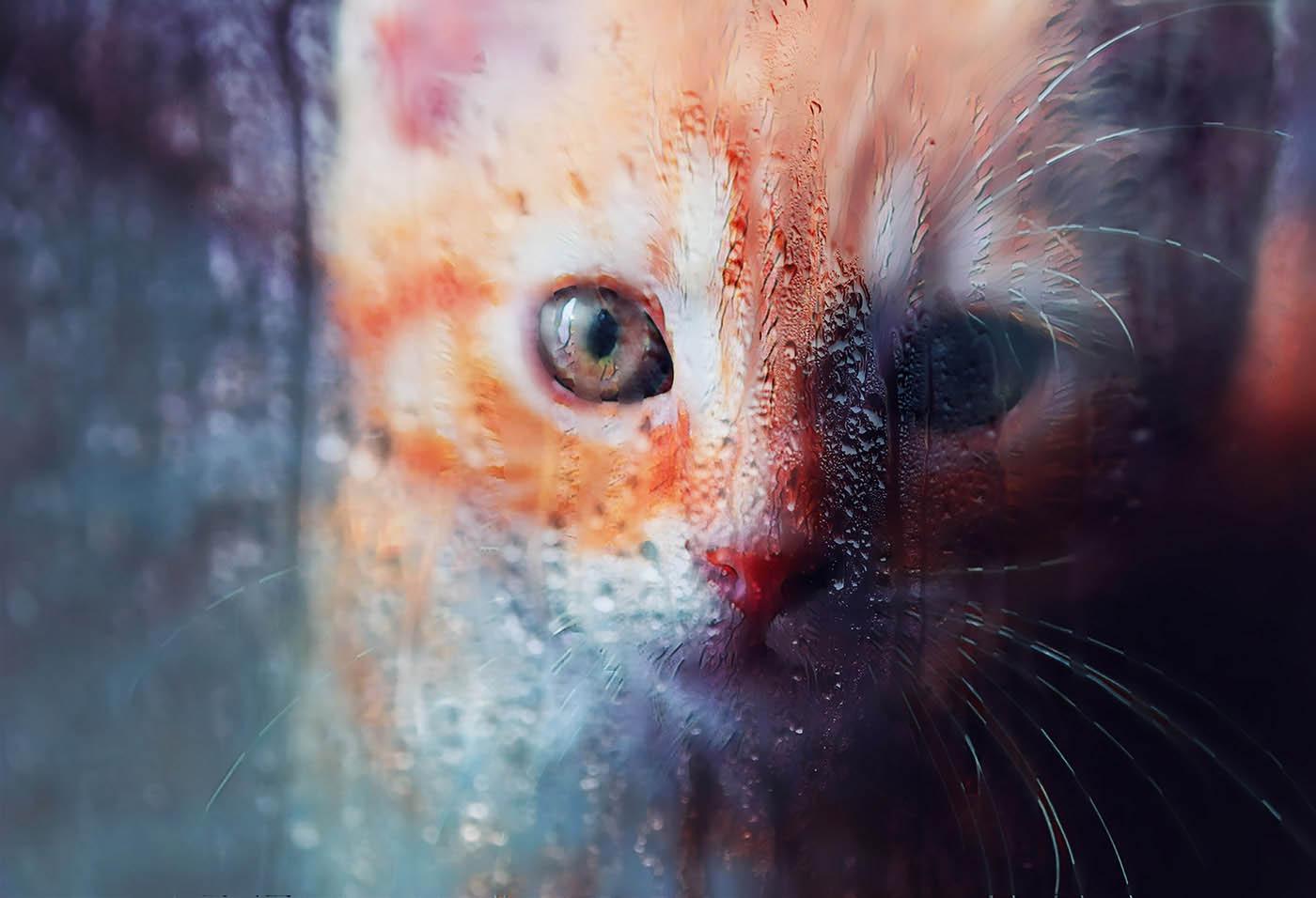 Sad Kity Cat Stock Photo - Royalty-Free Stock Imagery